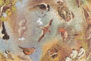 Emily Jones, British Waders, puzzle (detail)
